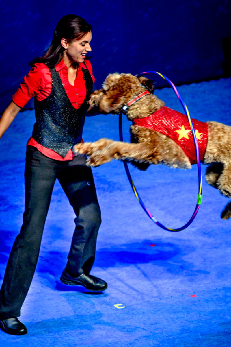 Frank Perondi's Stunt Dog Experience  performed at the Blizzard theater Friday April 27