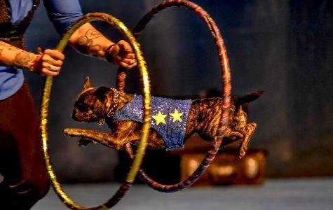 Frank Perondi's Stunt Dog Experience