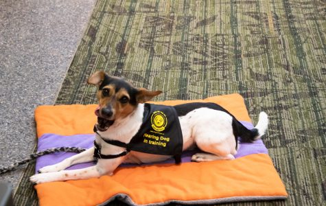 Anna Evans brings a service dog from Dogs On the Go