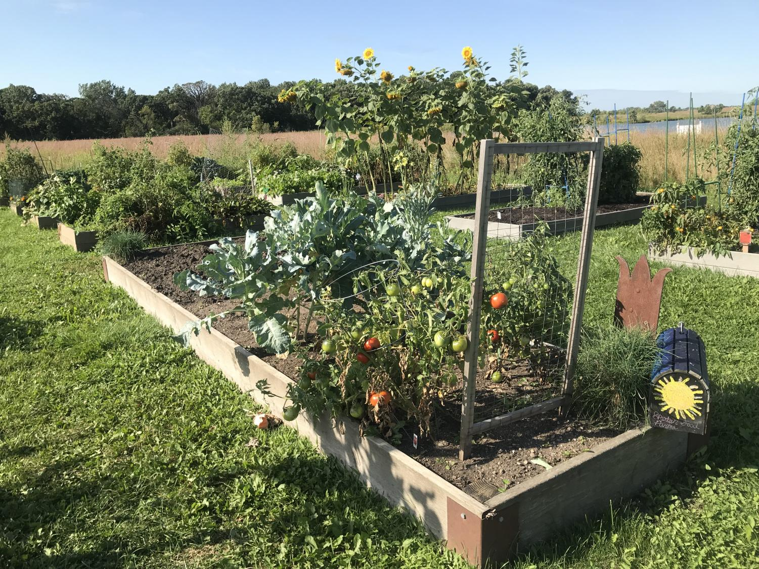 Spartan Food Pantry garden maintained by Elgin Community College Phi Theta Kappa honor society students at Advocate Sherman Hospital Community Garden and Prairie.